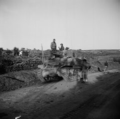 A Sqn Leaders's Sherman tank waiting to cross the Sangro